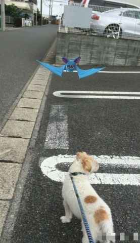 pokemon go2 コタローと.jpg